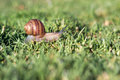 Escargot au parc mountain view de shoreline Images stock