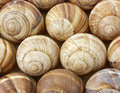 Escargot shells in rows Royalty Free Stock Photo