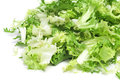 Escarole endive some chopped leaves of on a white background Stock Image