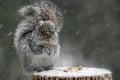 image photo : Squirrel in Winter