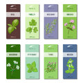 Essential oil labels collection. Basil, parsley, rosemary, oregano, marjoram, peppermint, melissa, thyme. Stripes