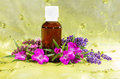 Essential oil with lavender and sidalcea brown glass bottle of plant extracts fresh flowers of or prairie mallow for use in Stock Photography