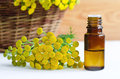 Essential tansy oil small bottle of Royalty Free Stock Photos