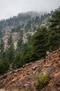 Estes Park Colorado Rocky Mountain Forest Landscape Royalty Free Stock Photo