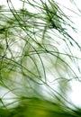 Estratto delle piante Immagini Stock Libere da Diritti