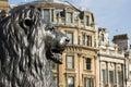 Estátua do leão, quadrado de Trafalgar Foto de Stock