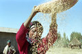 Ethiopian woman separate chaff from the grain Royalty Free Stock Photo