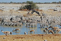 Etosha National Park landscape with pond water Royalty Free Stock Photo