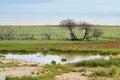 Etosha national park, Namibia Royalty Free Stock Photo