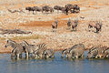 Etosha waterhole plains zebras gemsbok and blue wildebeest at a national park namibia Royalty Free Stock Photography