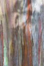 Eucalyptus bark close up of a tree with interesting color and texture Stock Photos