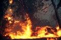 Eucalyptus trees on fire Stock Photos