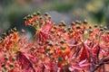 Euphorbia Stock Images