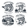 Eurasian River Perch Fish.Yellow Perch Fishing Club Emblem. Bass Fishing Logo Isolated on White Background. Vector Royalty Free Stock Photo