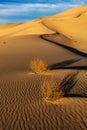 Eureka valley sand dunes death valley national park california Stock Image