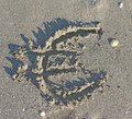 Euro symbol written large on the sand of the beach huge sea Stock Image