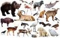 European animals isolated