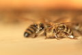 European bee honey in a hive Royalty Free Stock Photography