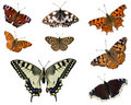 European butterflies Stock Image