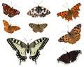 European butterflies Stock Image