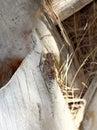 European cicada Royalty Free Stock Photo