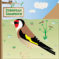 European goldfinch illustration on natural background Stock Images