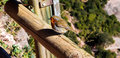 European robin perched on a fence post erithacus rubecula Royalty Free Stock Photos