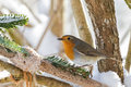 European robin redbreast bird perching near homemade bird feeder Royalty Free Stock Photo