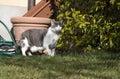 European white cat with green eyes in the garden
