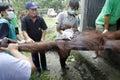 Evacuate orangutan animal activist evacuated ill in solo central java indonesia Stock Image