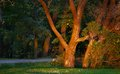 Evening Autumn Park Royalty Free Stock Photography