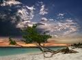 Pláž strom