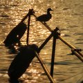 In the evening in beihai park, a duck stands leisurely on the mast of the dock Royalty Free Stock Photo