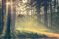 Evening forest with sun and light volume Stock Photo