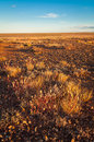 Evening on the gibber and mitchell grass plains in light sturt national park outback new south wales australia after good summer Stock Photo