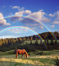 Evening landscape mountains beautiful horse Royalty Free Stock Image