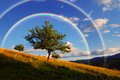 Evening landscape rainbow above tree Stock Photos