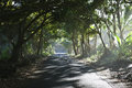 Evening mists sunlight illuminates tropical vegetation with sea mist along the famous red road highway south of pahoa the big Royalty Free Stock Photography