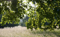 Evening mood in a flourishing park fodder meadow and green trees springtime the back light Stock Images