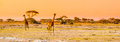 Evening panorama of savanna with giraffes, Amboseli National Park, Kenya, Africa Royalty Free Stock Photo