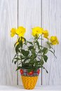 Evening primrose yellow flowers in a vase Stock Photo