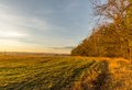 Evening scene of autumn field next to trees during sunset Royalty Free Stock Photo
