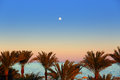 Evening sea and moon over palm trees beautiful landscape with Stock Image