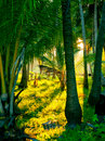 Evening sun in a misty rainforest Royalty Free Stock Photo
