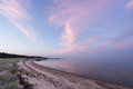 Evening sunlight and spruce tree on the coast, pink clouds and blue sky background. Beach in summer. Seaside forest nature Royalty Free Stock Photo