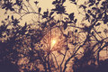 Evening sunray with a retro vintage filter effect Stock Image