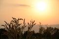 Evening sunset gloaming sundown dusk nightfall grass sunlight sun eventide Royalty Free Stock Photos