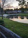 Evening sunset watching the sun set as i take an stroll through the neighborhood you can see a duck next to the pond Royalty Free Stock Photography