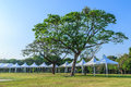 Events marquee tent and big tree Stock Image
