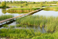 Everglade park Stock Image